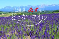 【東京発限定】どこかにマイルで必ず北海道に行ける方法を解説します